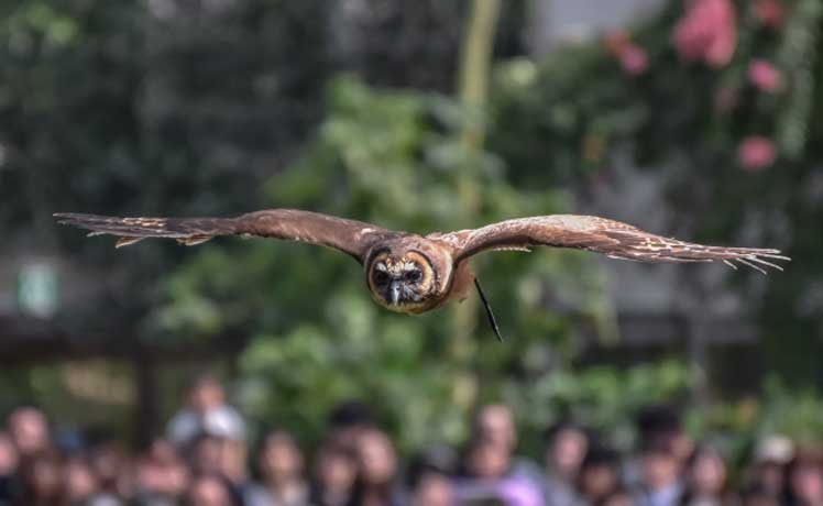神戸どうぶつ王国は子供も大人も楽しい動物園!アクセス・クーポン・ランチなど各種情報