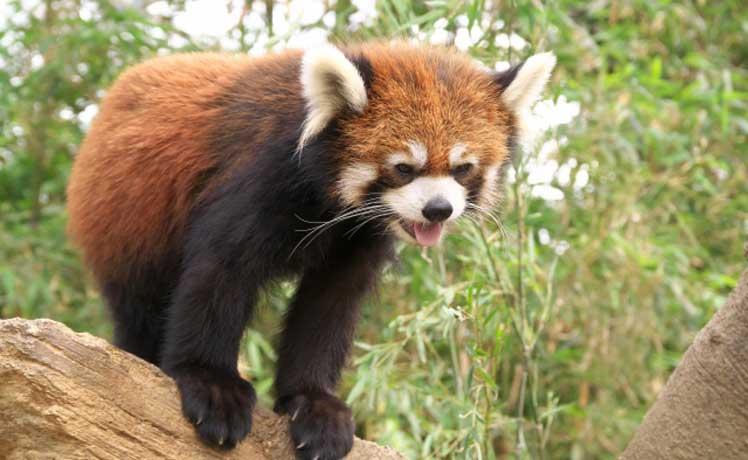 神戸どうぶつ王国は子供も大人も楽しい動物園!アクセス・クーポン・ランチなど各種情報まとめ│まとめ